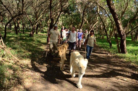 Vacances_Maurice_lion_walk