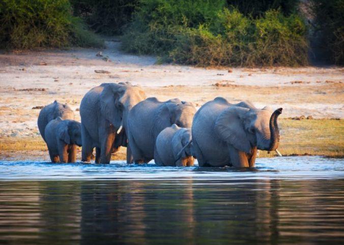 Des vacances mémorables lors d'un safari au Botswana