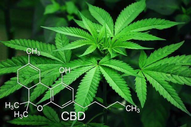 CBD cannabis, cannabidiol, en savoir plus.